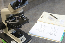 Laboratory Testing image