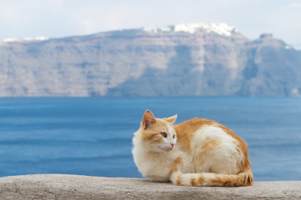 cat by lake image