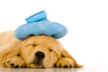 Sick dog image